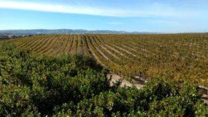 Santa Ynez wine country